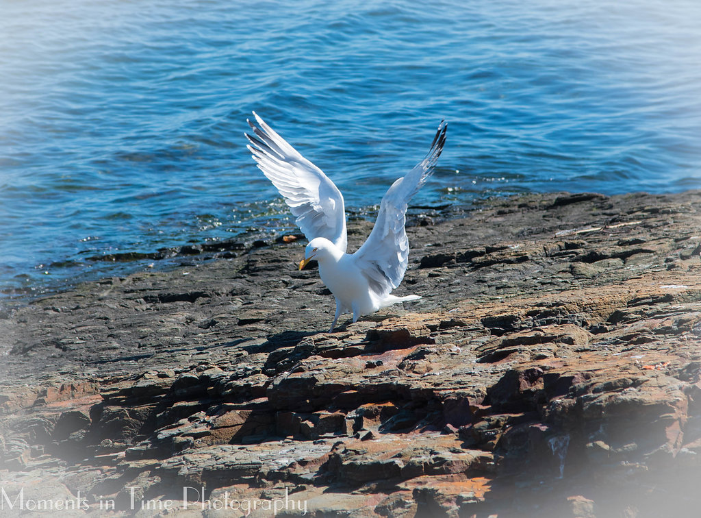 Sea Gull Bar Harbor